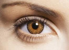 Visualizar pasillo Volverse loco  gold eyes | Contactlens, Natuur, Paars