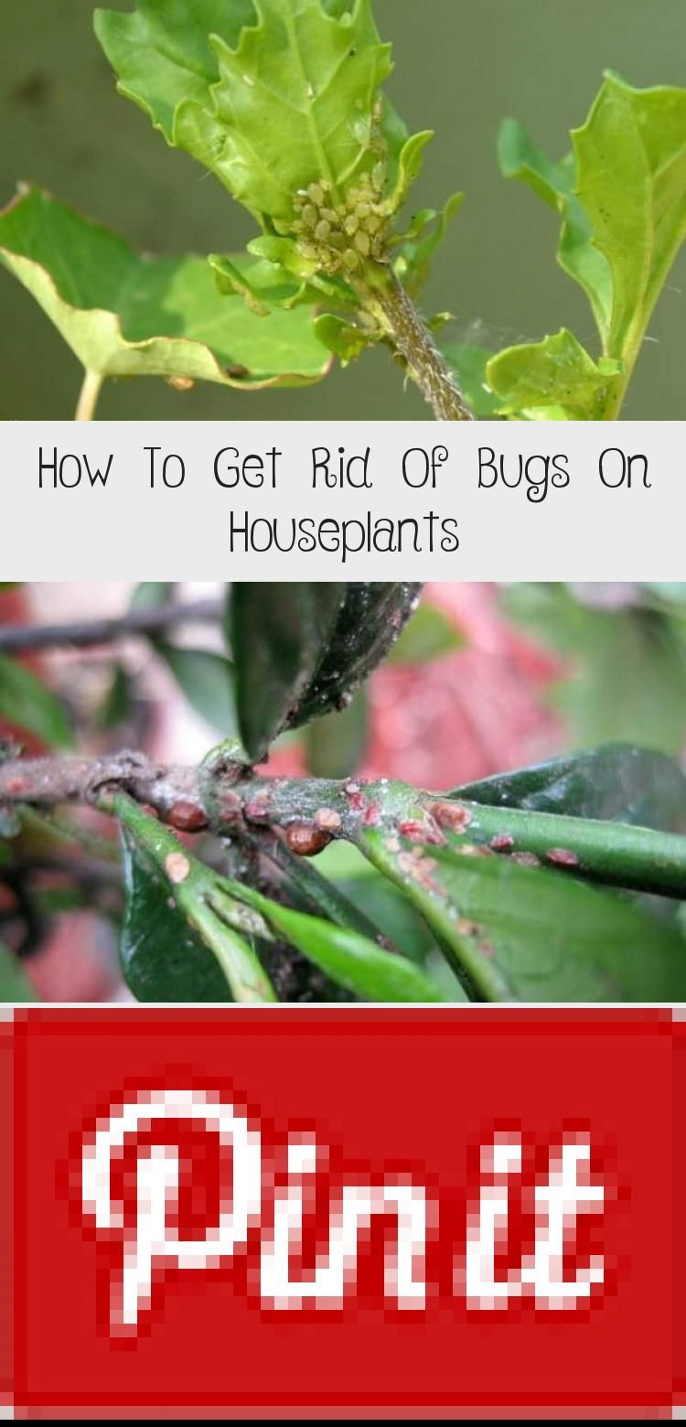 Whether It Be Spider Mites Mealybugs Fungus Gnats That Look