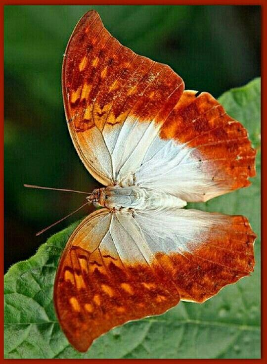 Bonita Mariposa Butterflies Pinterest Mariposas Polilla And
