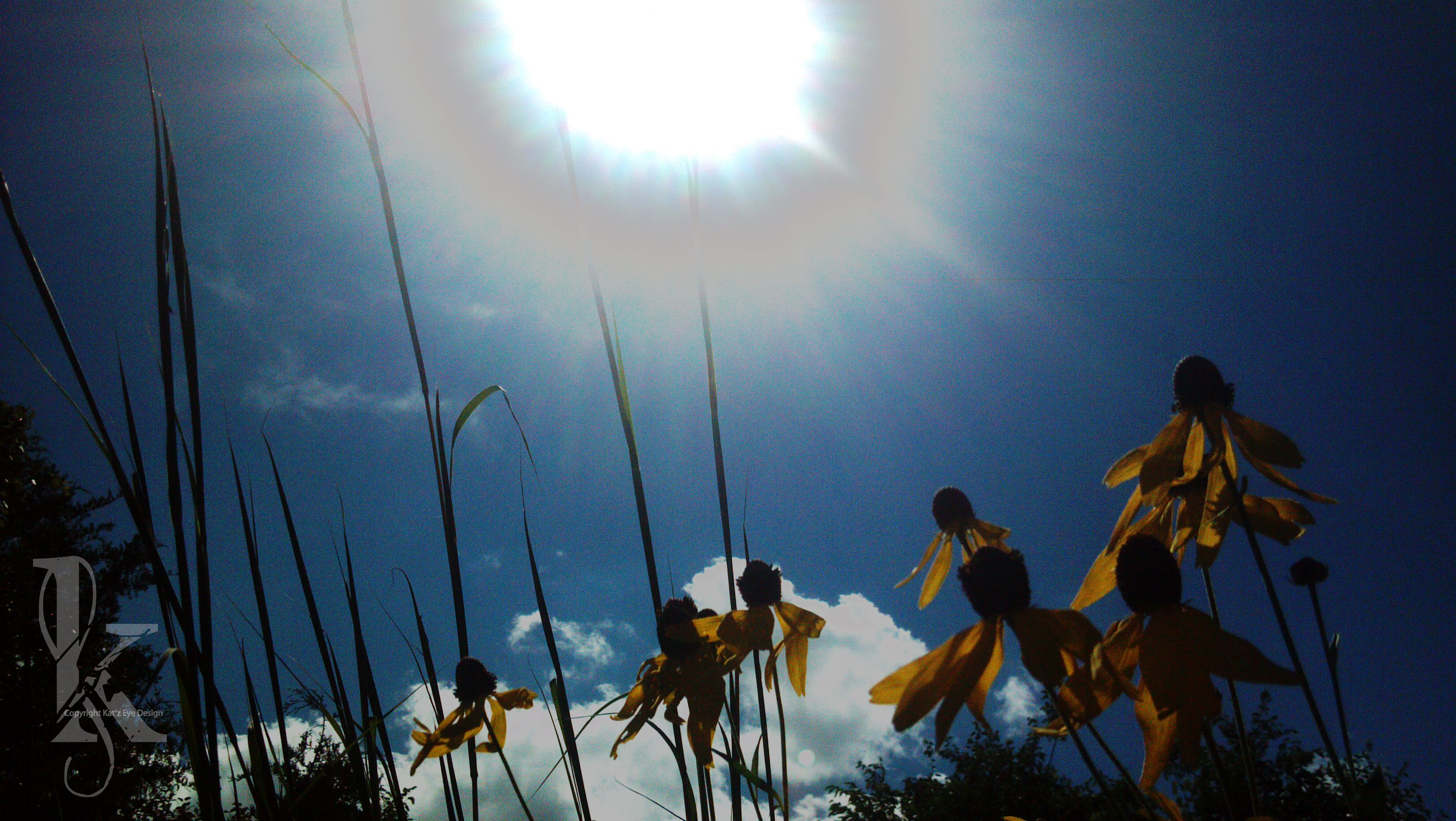 Black Eyed Susan Sun Flare (With images) Sun flare