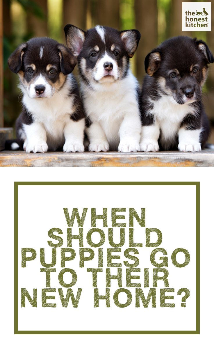 When Should Puppies Go To Their New Home Honest Kitchen Blog Posts
