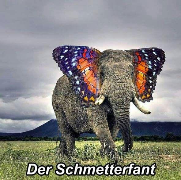 Schmetterwas?