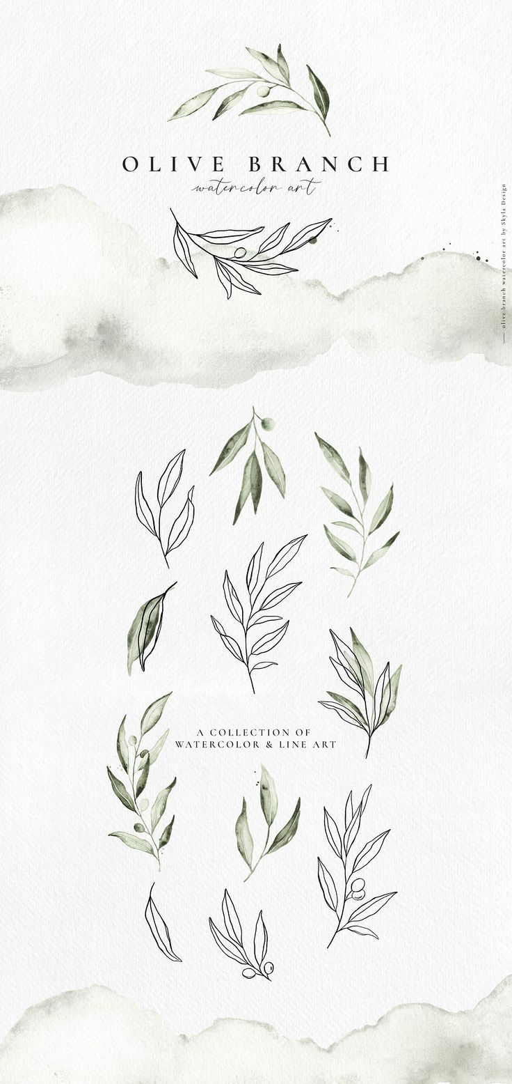 line art Olive branch watercolor amp line art by Skyla Design on Creative Market