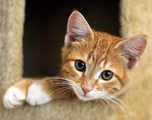 70+ Orange Cat Names Find the Purrfect Name All Pet