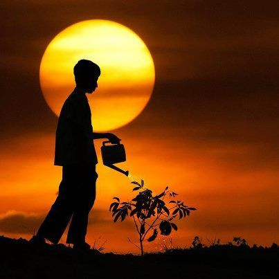 Nothing can nourish the soul but light... Rumi