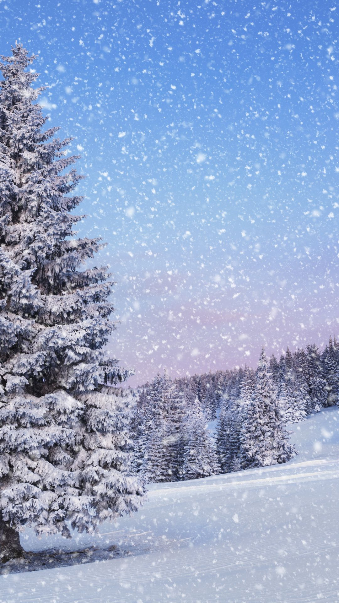 Nature Landscape Snow Winter Time Of The Year Tree Photo Winter Wallpaper Winter Background Winter Scenery