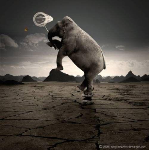 manipulacion_con_photoshop_elefante_cazando_mariposas_thumb.jpg (500×504)