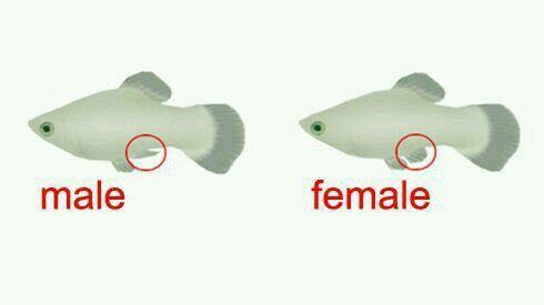 Pin On Aquarium Fish More