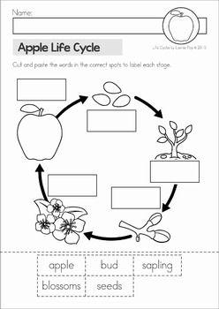 Apple Tree Life Cycle Worksheet - Checks Worksheet