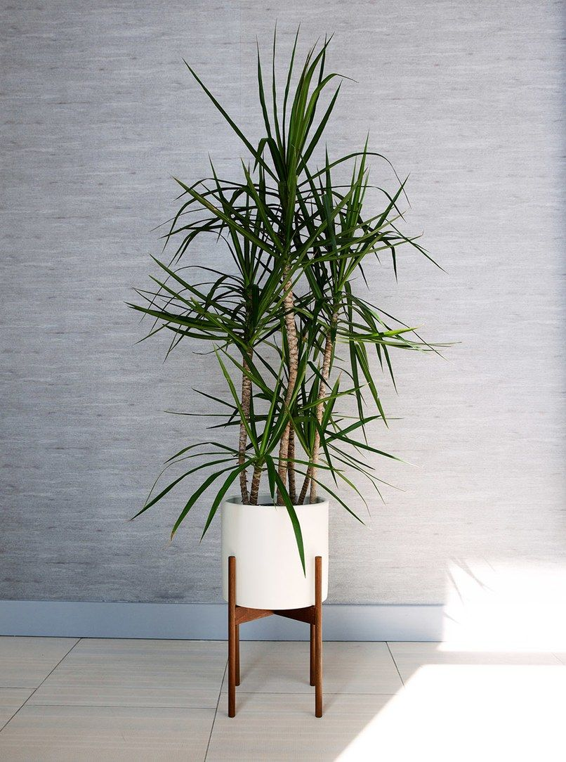 17 Best Indoor Trees And Tropical Plants To Grow In Your 400 x 300