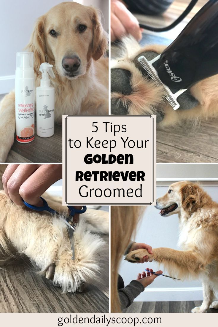 5 Tips To Keep Your Golden Retriever Groomed Between Appointments Dog Grooming Tips Puppy Grooming Dog Grooming