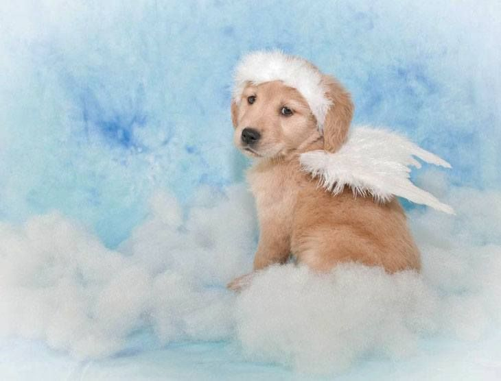 44 Female Golden Retriever Names Dog Names Female Dog Names Golden Retriever