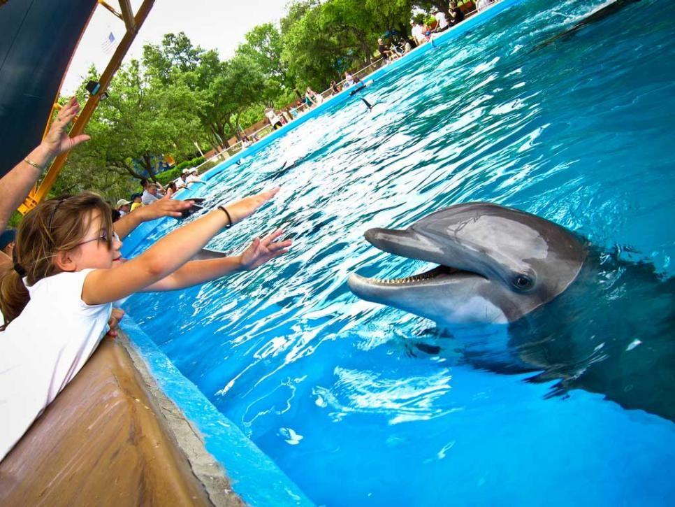 Big Texas Attractions Arts & Culture Sea world, Marine