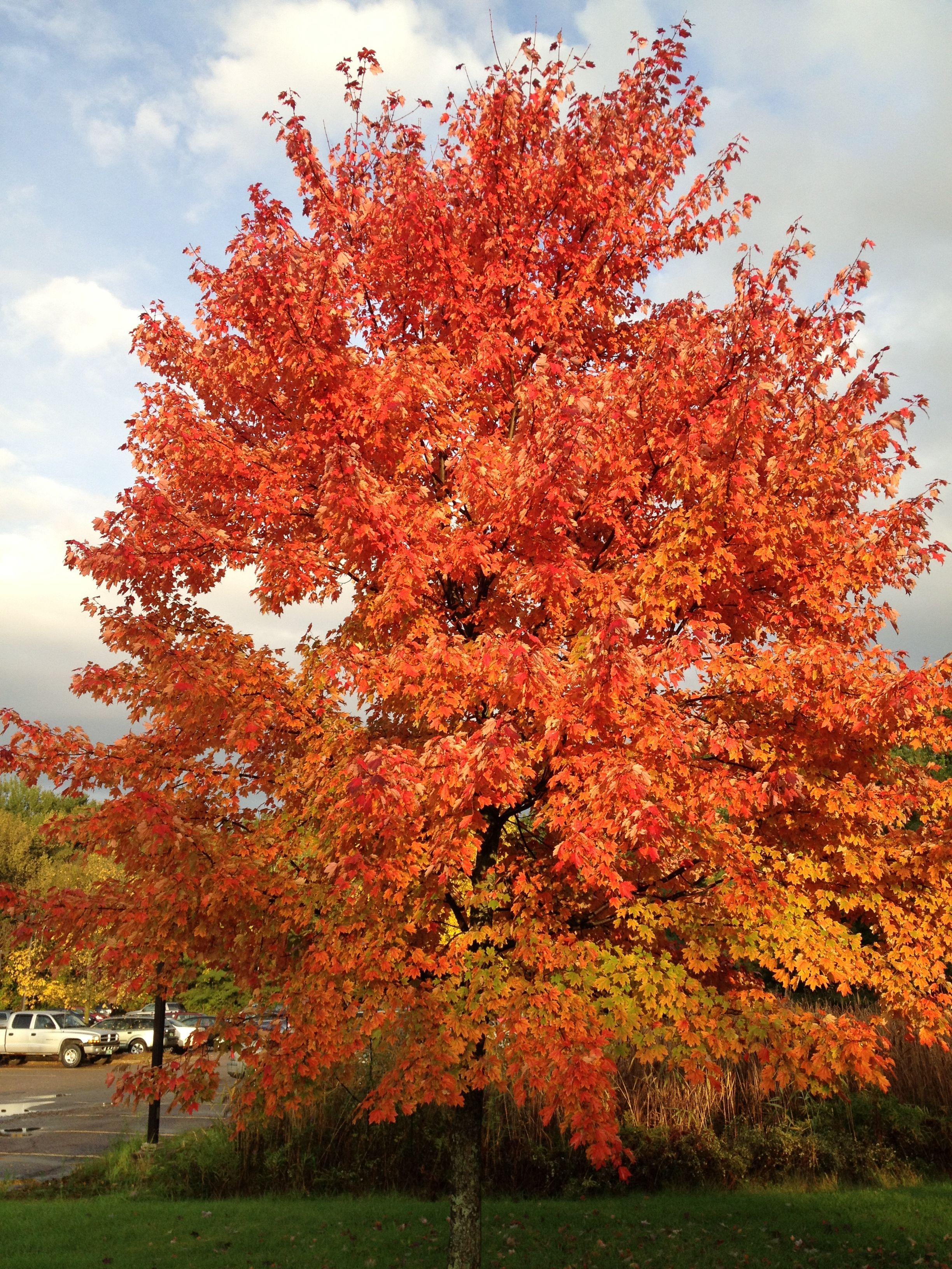 The Foliage In Burlington Vt Looks Great Foliage Plants Travel