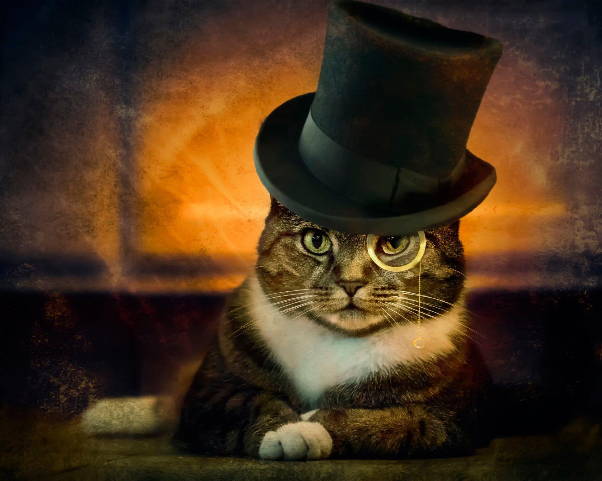 Обои шляпка, Кошка, кот. Кошки foto 13