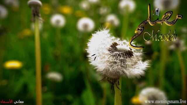 معنى اسم مصلح وصفات حامل هذا الاسم Mossleh Flowers Plants Dandelion