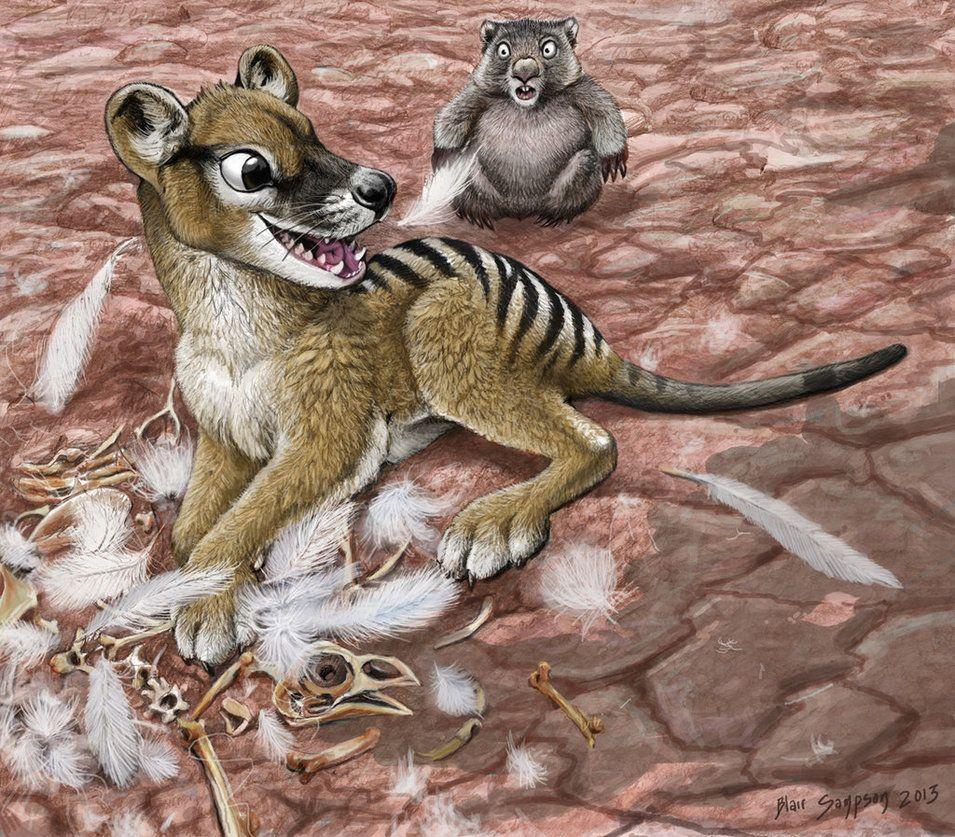Iluka Eats Karl, Thylacine, Wombat, and Chicken by Psithyrus on DeviantArt
