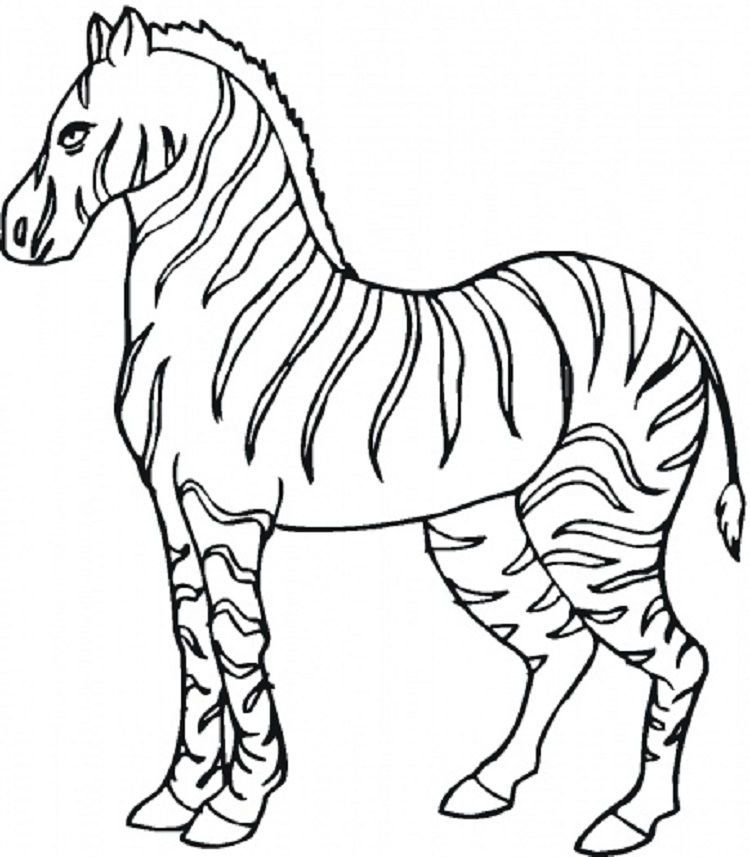 Animal Coloring Pages Zebra In 2020 Zebra Coloring Pages Animal Coloring Pages Animal Templates