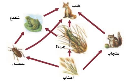 انتقال الطاقة في النظام البيئي Interactive Worksheet By Ahlam Alghasham Wizer Me In 2021 My Images Edtech