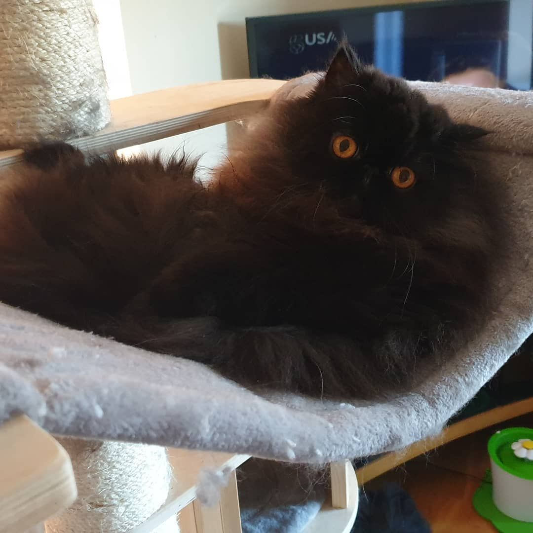 Nabi The Stray Cat Keeps Guard All Day To Keep His Wife Safe In 2020 Cute Black Cats Cat Toys Cats