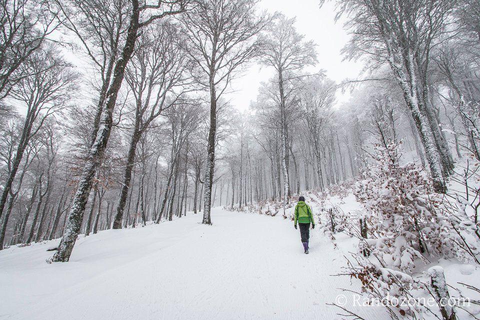 Aubrac and snow. France.