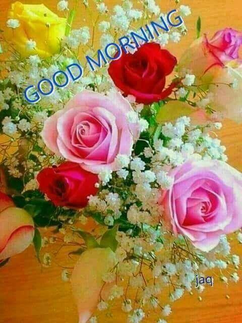 Good Morning Fresh Cut Flowers