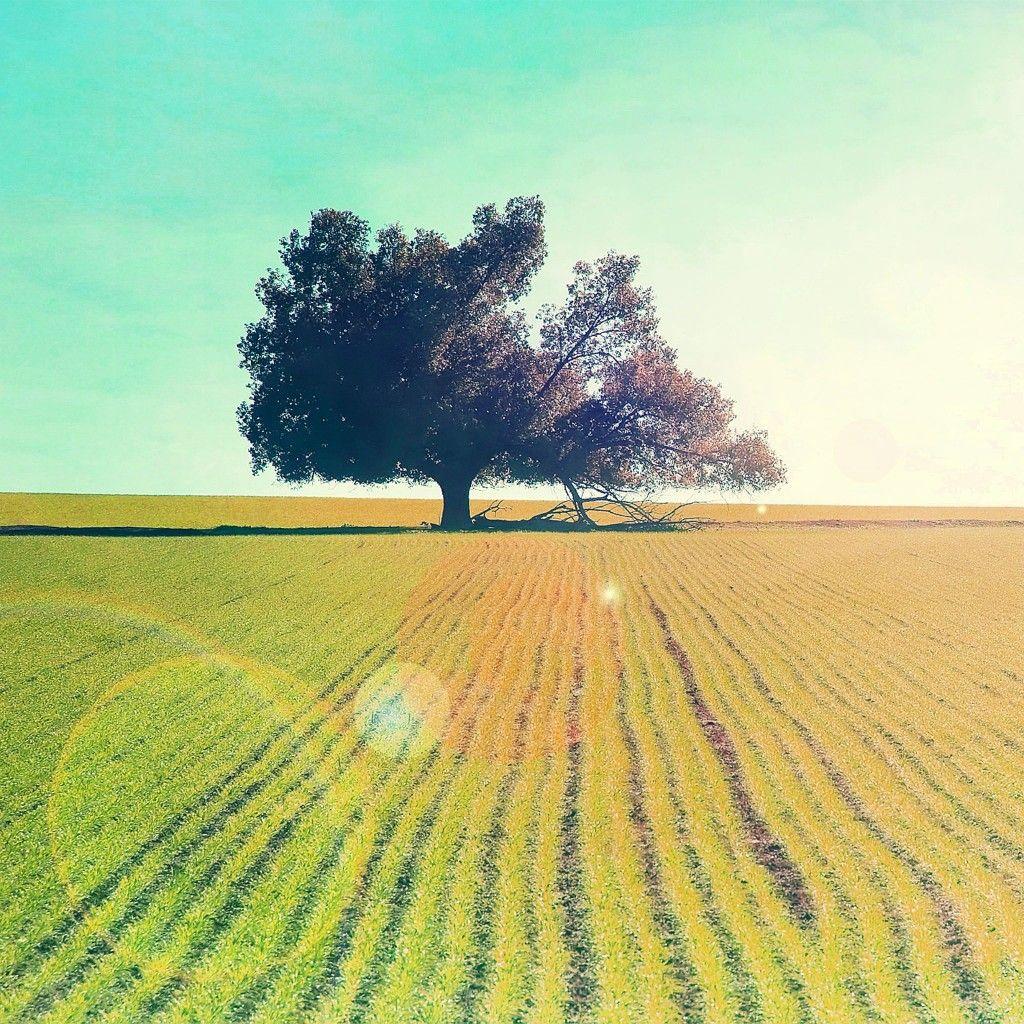 Tree In The Sun iPad Wallpaper HD