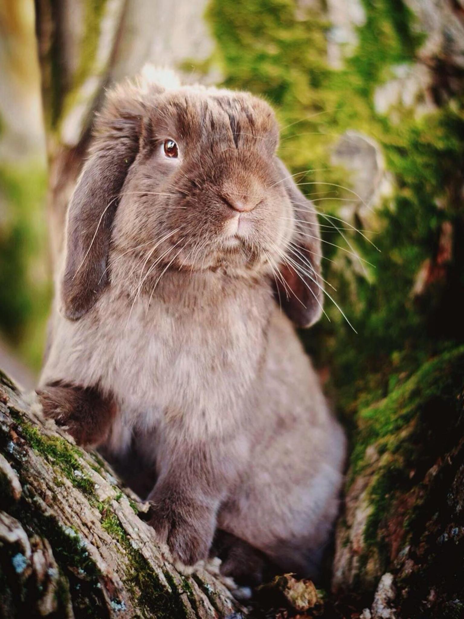 Pin Von Romy Muller Auf Tiere Susse Tiere Haustiere Tiere