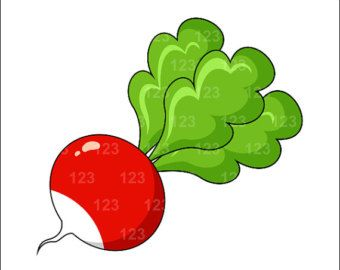 radish clipart free clip art images spice of life pinterest rh pinterest com radish clipart free picture of radish clipart