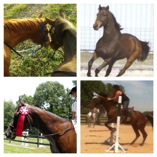 Happy photos from Galloping Out! Galloping Out is a retirement - retirement program