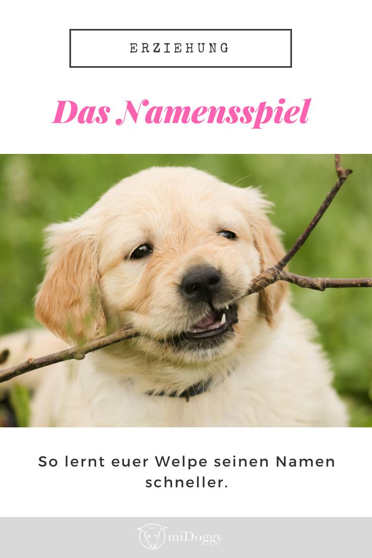Das Namensspiel Ein Cooler Trainingstipp Hunde Namen Spiele Und Hundeerziehung