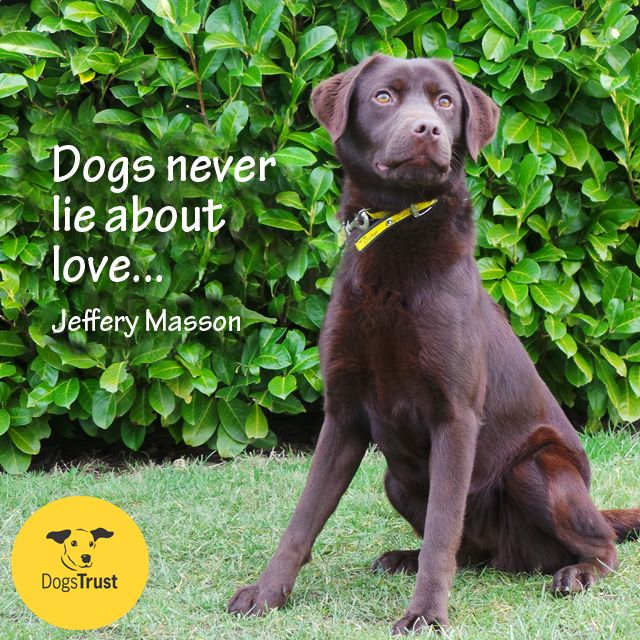 Dogs Never Lie About Love Dogs Trust Dog Quotes Quotes Cute Animals Rescue Dogs Rehoming Pet Unconditional Labrador Dog Quotes Dogs Trust Dogs