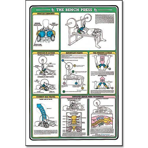 Algra Fitnus Chart Bench Press Instruction Card Diy Pinterest