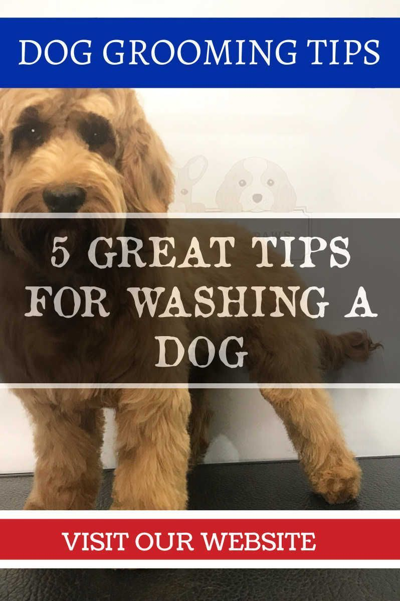 Pin By Bunodu On How To Groom A Dog Dog Grooming Dog Grooming Tips Dog Tricks Easy