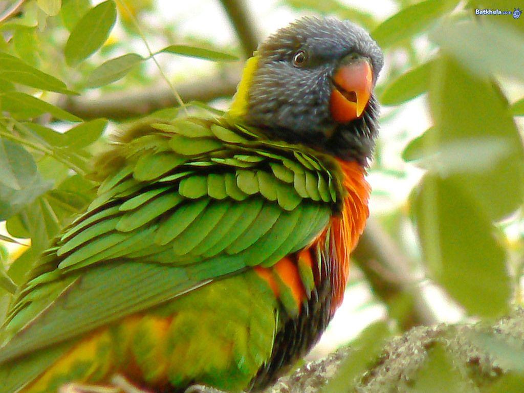 National Geographic Birds National Geographic Birds Birds
