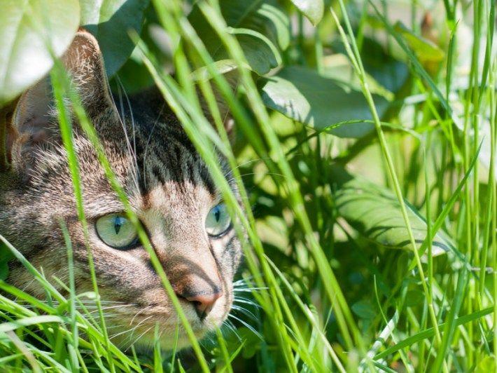 Astuces pour loigner les chats du potager et des plantations bonnes id es astuces repulsif - Repulsif chat jardin naturel ...