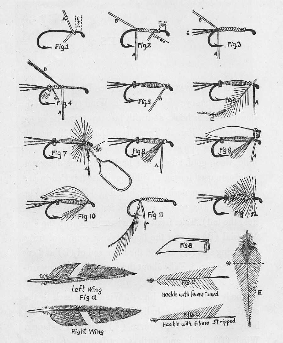 fly tying  proportions of the fly