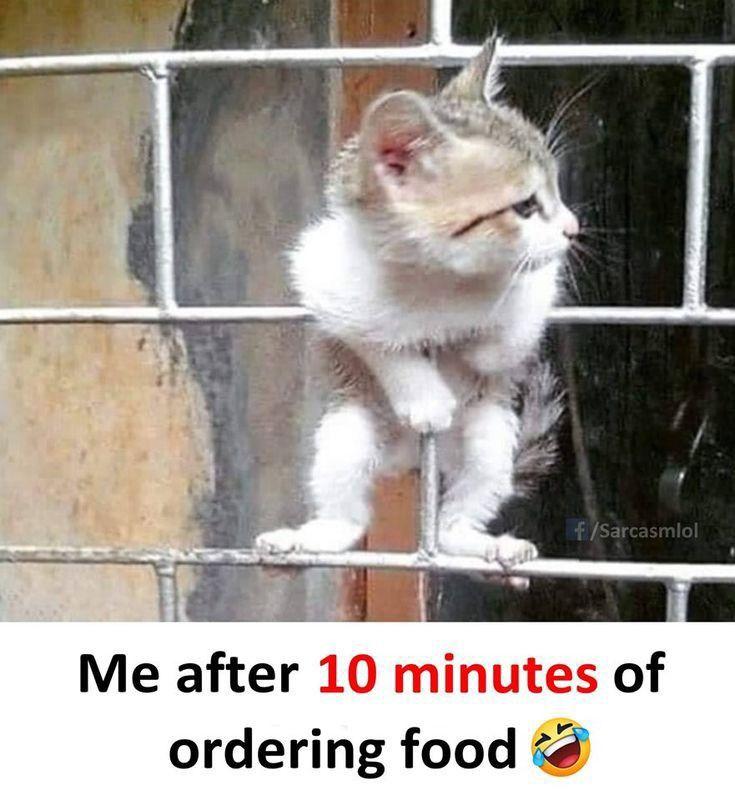 Cats funny mems