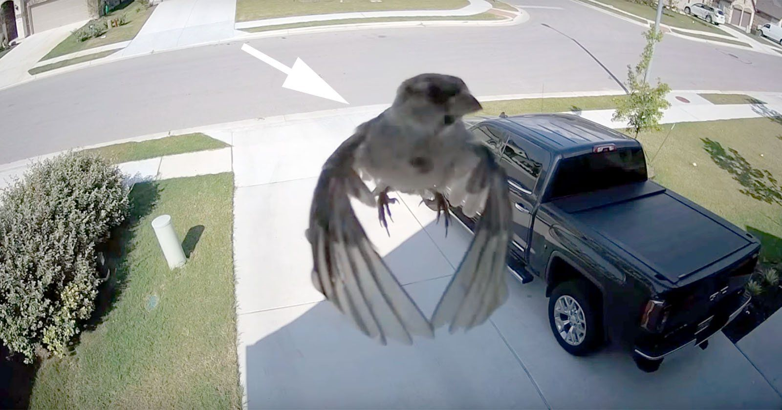 When A Cameras Frame Rate Is Synced To A Birds Wings Camera - Syncing a videos frame rate with a birds wings does something amazing