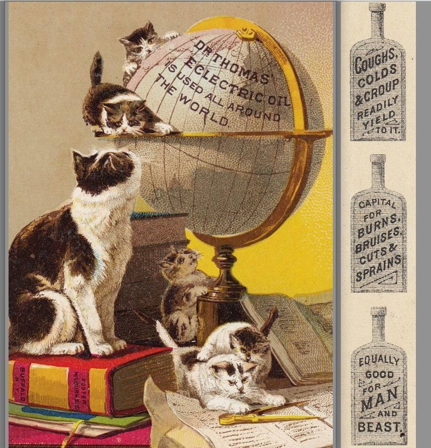 Times Victorian Timesvictorian On Twitter In 2020 Cute Cats And Kittens Cats And Kittens Vintage Posters