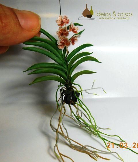 f7d00fd6f8547 Mini orquídea vanda   Orquideas   Pinterest   Mini, Orquidea vanda y ...