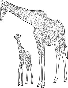 Ausmalbild Giraffe Mit Baby Ausmalbilder Tiere Ausmalen Giraffe
