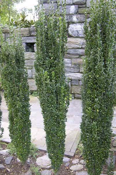 Pieneen tilaan tarvitaan kapeita kasveja, mutta mielestäni ne kaikki näyttävät hassulta. Etsintä jatkuu.