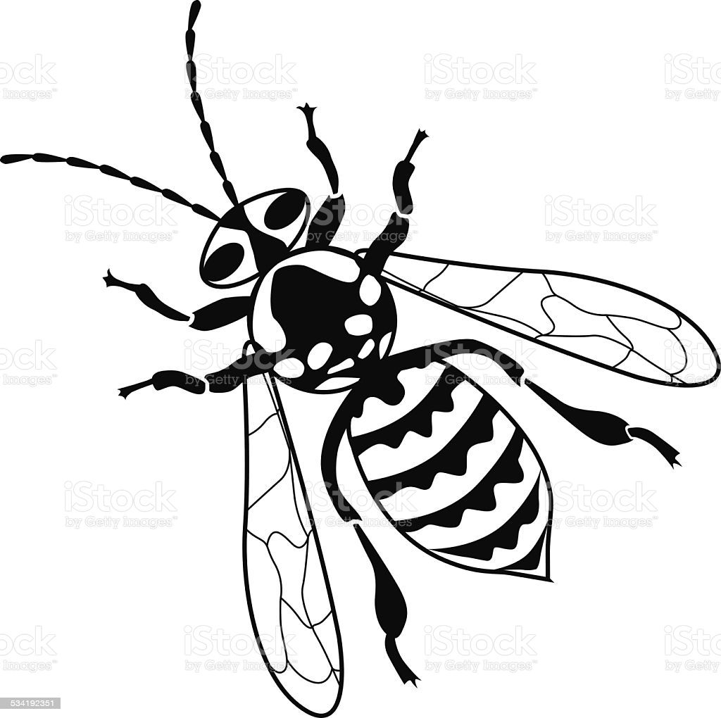 Https Media Istockphoto Com Vectors Yellow Jacket Bee Vector Illustration In Black And White Vector Id534192 Yellow Jacket Bee Vector Illustration Vector Art