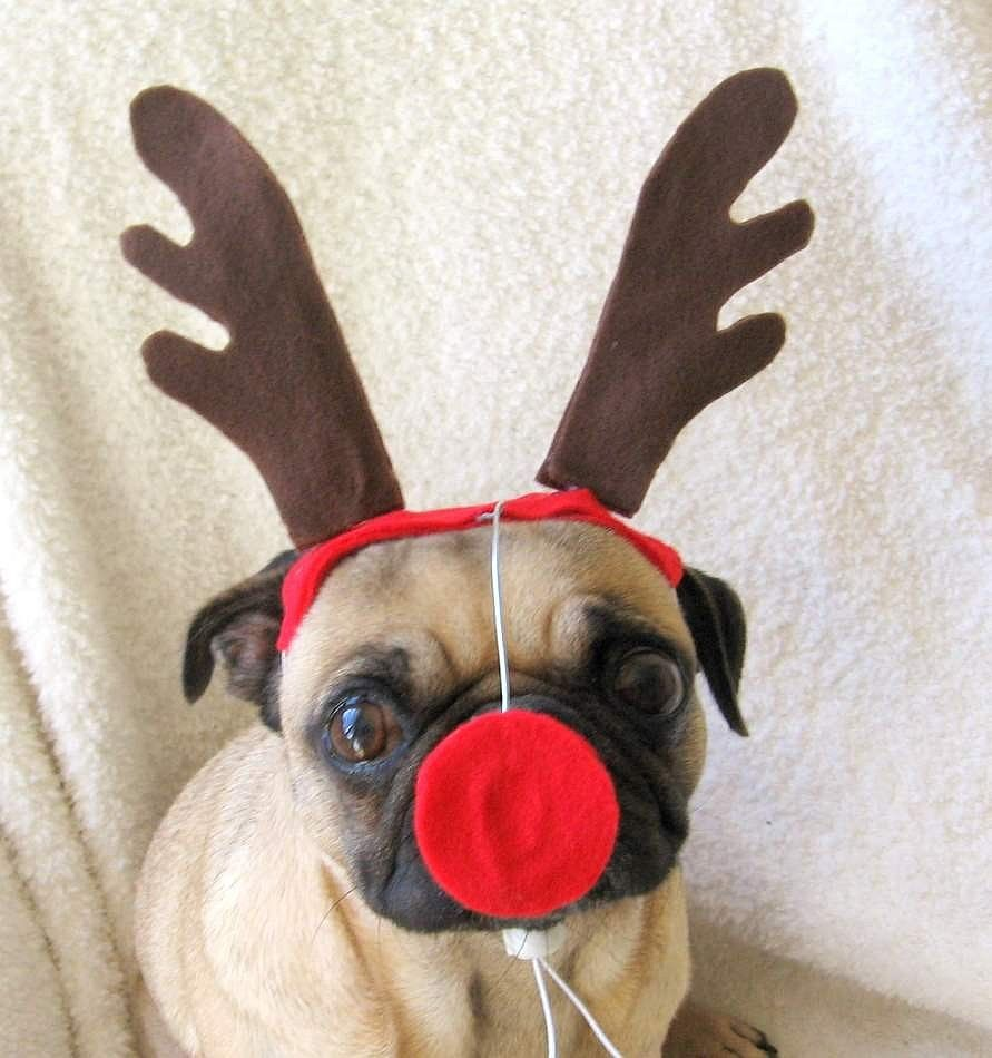 60 Pet Costumes To Diy On The Cheap Pet Costumes Christmas