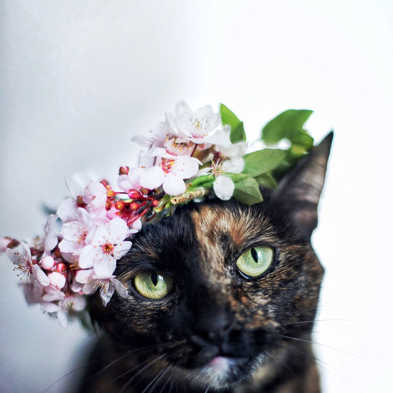 This looks like my cat i gave her a rose one time and she just the dainty squid flower crownsflower izmirmasajfo Image collections