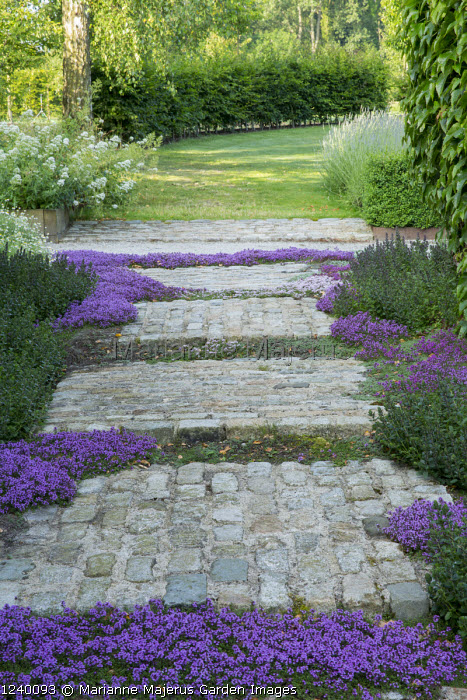 Marianne Majerus Garden Images Garden Images Paving Stones Growing Thyme