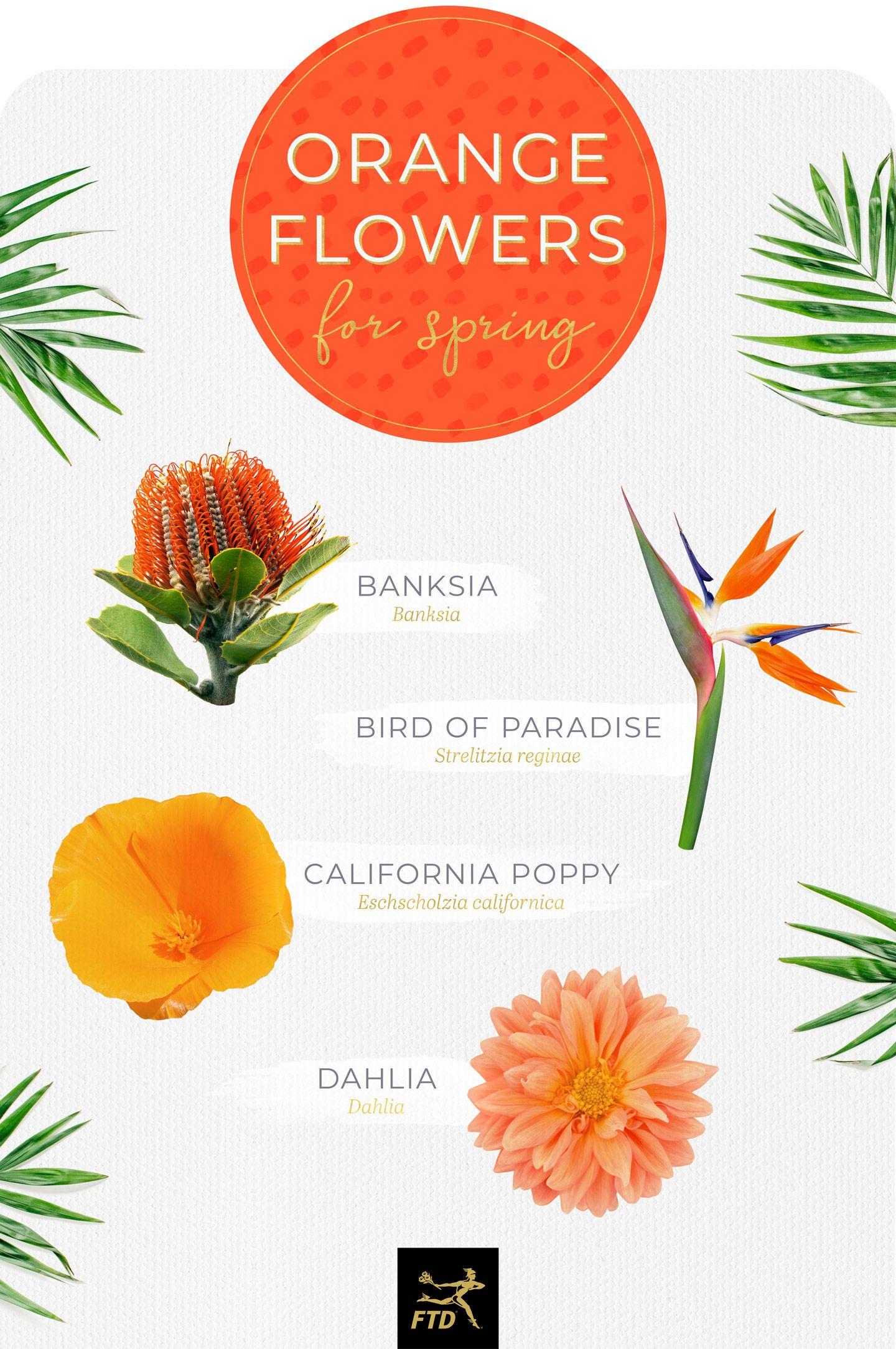 20 Types Of Orange Flowers Ftd Com Types Of Oranges Orange Flowers Types Of Flowers