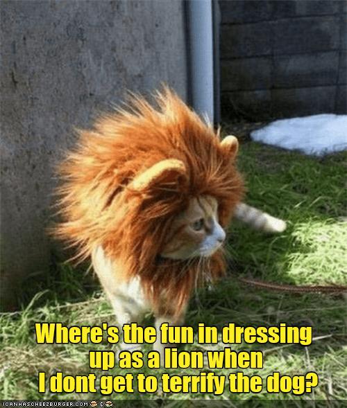 Where's the fun? Funny cats, Cat memes, Funny cat memes