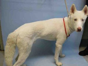 Beethoven A1109984 Shelter Dogs Dogs Animal Shelter